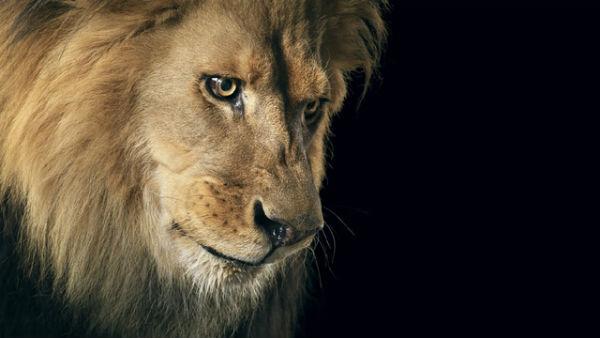 Ζώα από την ανθρώπινη τους πλευρά! (ΦΩΤΟ) - Φωτογραφία 2