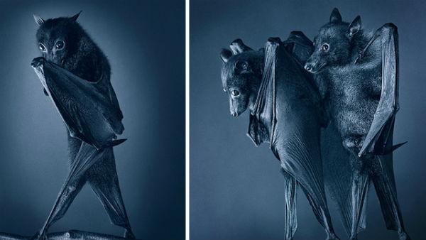 Ζώα από την ανθρώπινη τους πλευρά! (ΦΩΤΟ) - Φωτογραφία 5
