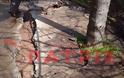 Hλεία: «Βουλιάζουν» δρόμοι και σπίτια στη Φρίξα! - Φωτογραφία 2