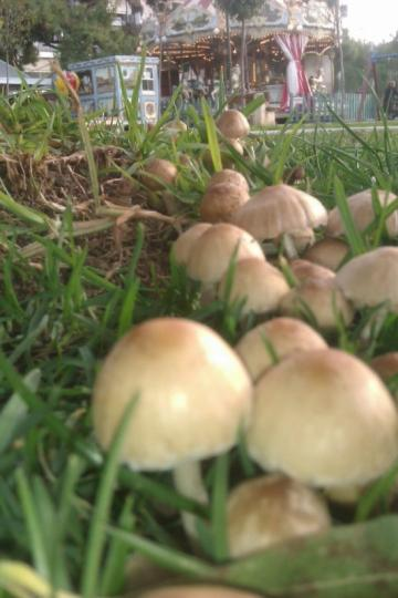 Πάτρα: Φύτρωσαν μανιτάρια στα Ψηλαλώνια! - Φωτογραφία 2