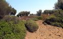 ''Στο σφυρί'' καταπράσινο νησάκι στη Χαλκιδική - Φωτογραφία 2