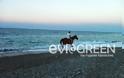 Στόμιο: Το άλογο που έκανε μικρούς και μεγάλους να κολλήσουν! - Φωτογραφία 3