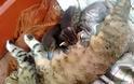 Γάτα υιοθέτησε παπάκι! - Φωτογραφία 2