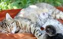 Γάτα υιοθέτησε παπάκι! - Φωτογραφία 3