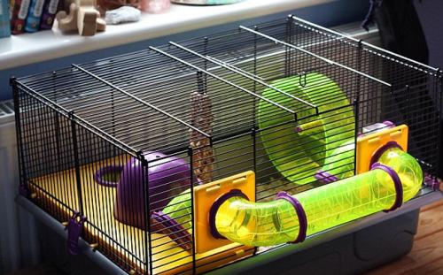 Χάμστερ γιωτόμπαλο ... κατάπιε μαγνήτη και κόλλησε στο κλουβί του - Φωτογραφία 4