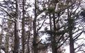 Το παράξενο δέντρο… χταπόδι! - Φωτογραφία 7