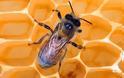 Οι μέλισσες έχουν εξαφανιστεί ήδη μια φορά;