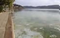 Σε απαράδεκτη κατάσταση η λίμνη της Καστοριάς. Μολυσμένη και βρώμικη [video] - Φωτογραφία 5