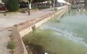 Σε απαράδεκτη κατάσταση η λίμνη της Καστοριάς. Μολυσμένη και βρώμικη [video] - Φωτογραφία 6
