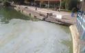 Σε απαράδεκτη κατάσταση η λίμνη της Καστοριάς. Μολυσμένη και βρώμικη [video] - Φωτογραφία 7
