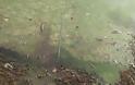 Σε απαράδεκτη κατάσταση η λίμνη της Καστοριάς. Μολυσμένη και βρώμικη [video] - Φωτογραφία 8