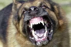 Πήγε να χαϊδέψει σκύλο και της δάγκωσε το μισό χέρι μέχρι το κόκαλο! - Φωτογραφία 1