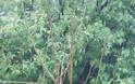 Συμβαίνει τώρα: Η Ναύπακτος πλήττεται από ισχυρή χαλαζόπτωση - Φωτογραφία 3