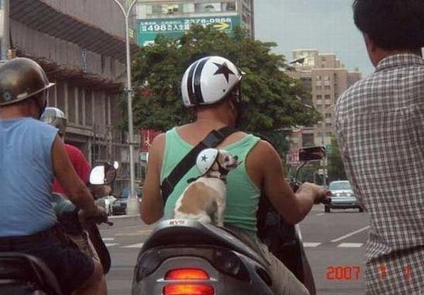 FUNNY: Εκτελούνται μεταφορές σκύλων...(PICS) - Φωτογραφία 2