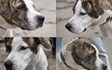Σκυλίτσα με σοβαρό πρόβλημα στα πόδια ζητά την βοήθεια μας για να γίνει καλά