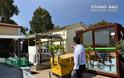 Χασισόδεντρα βρήκε η αστυνομία στις αποθήκες του Δήμου Ναυπλίου - Φωτογραφία 3