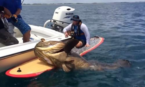 Ψαράς έδωσε «μάχη» με τερατώδες ψάρι - Το βίντεο κόβει την ανάσα - Φωτογραφία 3