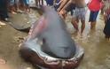 Καρχαρίας Megamouth: Ένα σπάνιο και τρομακτικό είδος - Κάτι τέτοιο δεν έχετε ξαναδεί... [photos] - Φωτογραφία 2