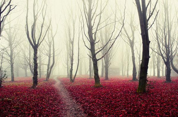 Τα πιο μυστήρια δάση όλων των εποχών [photos] - Φωτογραφία 10