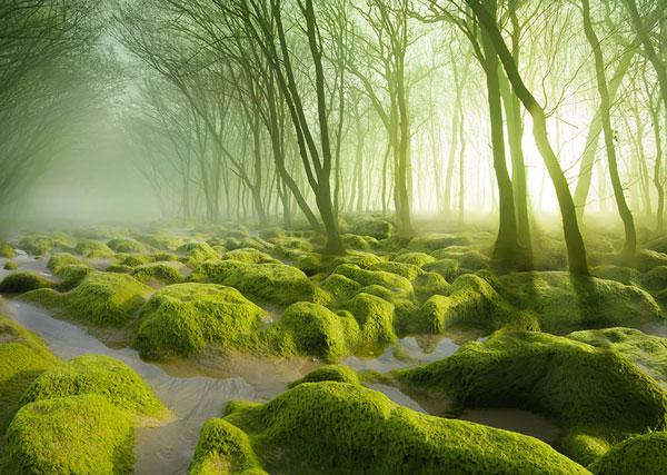 Τα πιο μυστήρια δάση όλων των εποχών [photos] - Φωτογραφία 2
