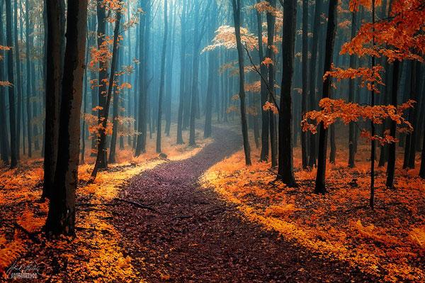 Τα πιο μυστήρια δάση όλων των εποχών [photos] - Φωτογραφία 4