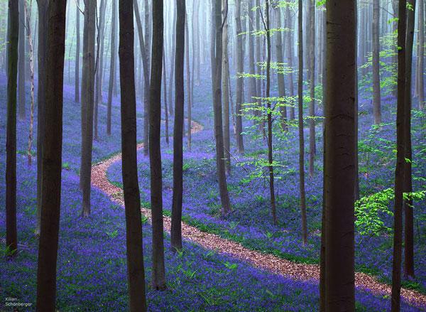 Τα πιο μυστήρια δάση όλων των εποχών [photos] - Φωτογραφία 5