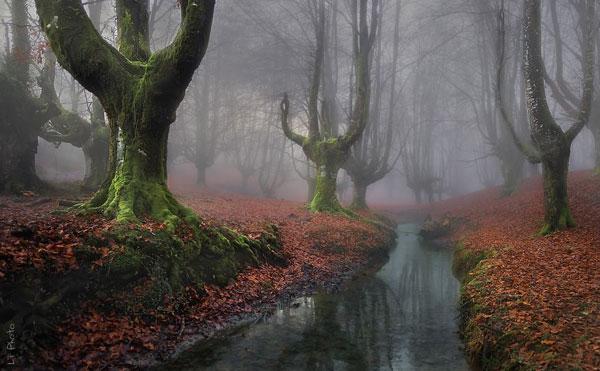 Τα πιο μυστήρια δάση όλων των εποχών [photos] - Φωτογραφία 6