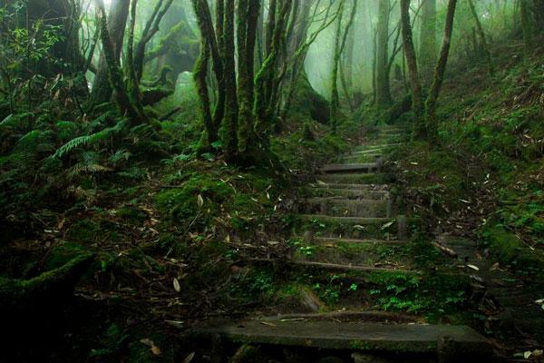 Τα πιο μυστήρια δάση όλων των εποχών [photos] - Φωτογραφία 7