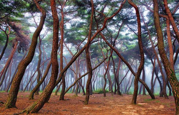Τα πιο μυστήρια δάση όλων των εποχών [photos] - Φωτογραφία 8