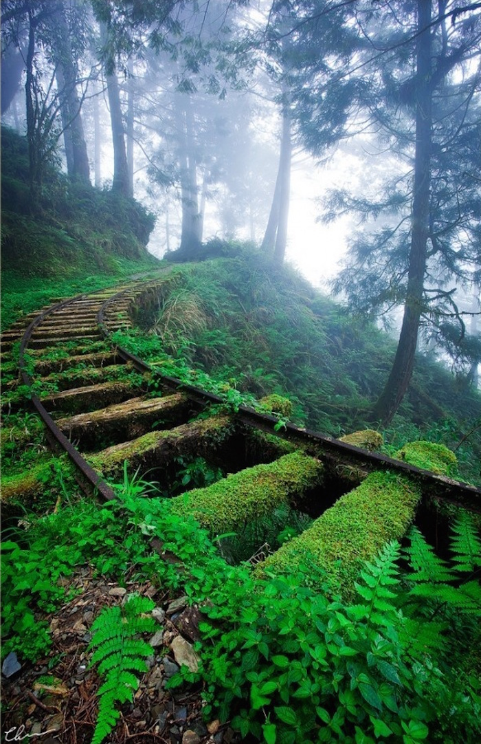 Εκεί που η φύση νίκησε τον πολιτισμό... Ανατριχιαστικές φωτογραφίες [photos] - Φωτογραφία 12