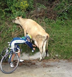 Τι κάνεις εκεί κ. ποδηλάτη;;; - Φωτογραφία 2