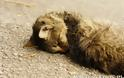 Δηλητηρίασε 16 γάτες στο Γιαννούδι, τον κατέγραψε η κάμερα ασφαλείας & τον καταδίκασε το Τριμελές Πλημμελειοδικείο Ρεθύμνου