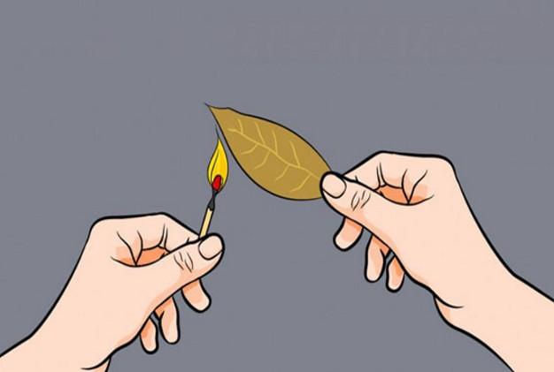 Δείτε τι θα συμβεί αν Κάψετε ένα φύλλο Δάφνης μέσα στο σπίτι και Περιμένετε για λίγα λεπτά… f - Φωτογραφία 1