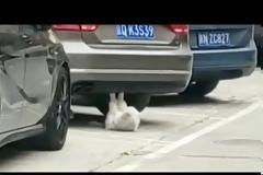Μια γάτα μάς «βάζει τα γυαλιά» κάνοντας push-ups! [vid]