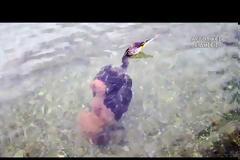 Ναύπλιο: Μεγάλο χταπόδι άρπαξε κορμοράνο [εικόνες και βίντεο]