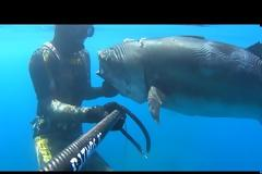 Δείτε πως χτύπησε μια ψαρούκλα Έλληνας ψαροντουφεκάς!! (ΒΙΝΤΕΟ)