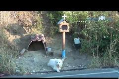 Συγκινητικό ΝΑΥΠΑΚΤΙΑ: Σκύλος ζει δίπλα στο εικόνισμα του νεκρού αφεντικού του (βίντεο)