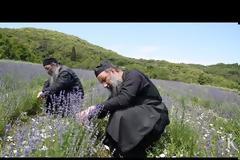 Made in Άγιον Όρος: Προϊόντα περιποίησης από μοναχούς
