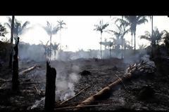 Πυρκαγιές στον Αμαζόνιο: Βασική αιτία η παγκόσμια δίψα για το βοδινό κρέας και τη σόγια από τη Βραζιλία