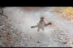 Τρομακτικό βίντεο: προσπαθεί να ξεφύγει από πούμα - «Δεν σκοπεύω να πεθάνω σήμερα»