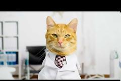 Έξυπνη αμμολεκάνη για γάτες με τεχνητή νοημοσύνη για πρόληψη ασθενειών