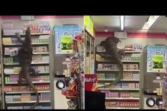 Γιγαντιαία σαύρα κάνει άνω κάτω σουπερμάρκετ (Video)