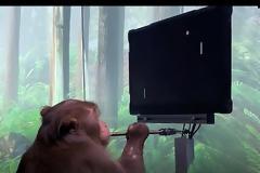 Πίθηκος παίζει pong με το μυαλό του (Video)