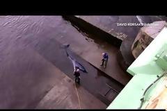 Φάλαινα παγιδεύτηκε στον Τάμεση - Διασώστες πάλεψαν και την έσωσαν (Video)