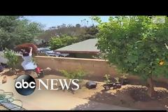 Θαρραλέα γυναίκα ορμάει εναντίων μιας αρκούδας για να σώσει τα σκυλιά της (Video)