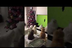 Οικογένεια από γάτες παρακολουθεί απορροφημένη ποντίκια μέσα από την τηλεόραση