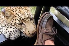 Άφησε τη λεοπάρδαλη να έρθει πολύ κοντά και είχε αυτή την κατάληξη