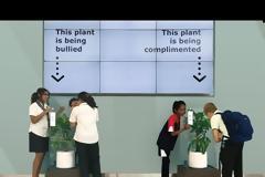 Κάνοντας bulling σε ένα φυτό! Απίστευτο κοινωνικό πείραμα!